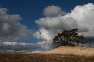 Zandverstuiving Hulshorst4